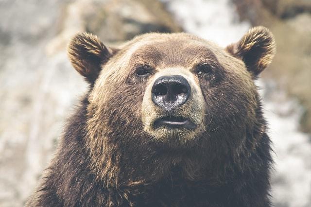 熊 ニオイ